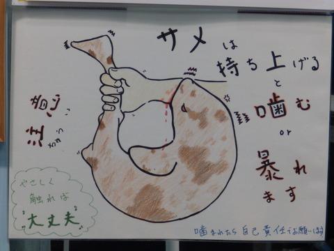 竹島水95