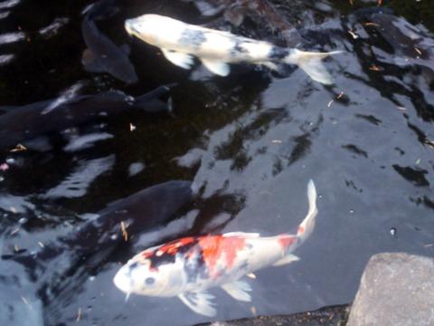 板橋本園9
