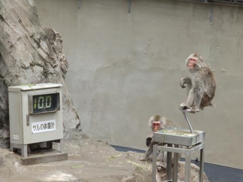 上野動物園1202_1