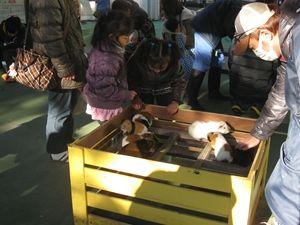 市川市動物園07