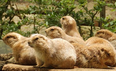 上野動物園1206_1
