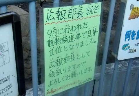 江戸動11