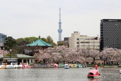 上野公園の桜と東京スカイツリー