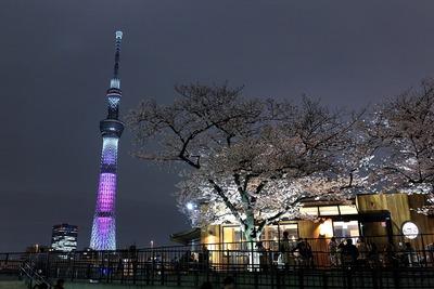 夜桜と東京スカイツリー