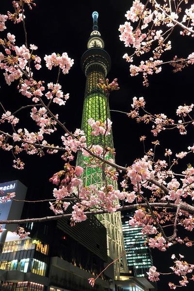 河津桜と東京スカイツリー「明花」