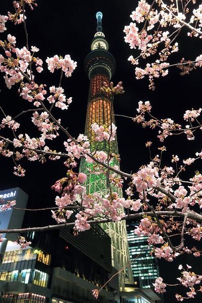 河津桜と東京スカイツリー「マリーゴールド」