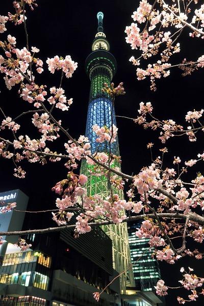河津桜と東京スカイツリー「ゆり」