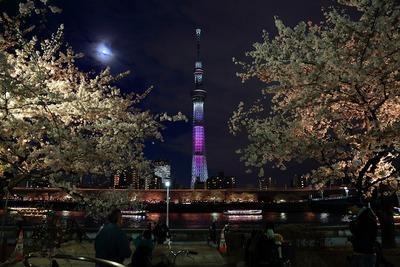 東京スカイツリーと夜桜