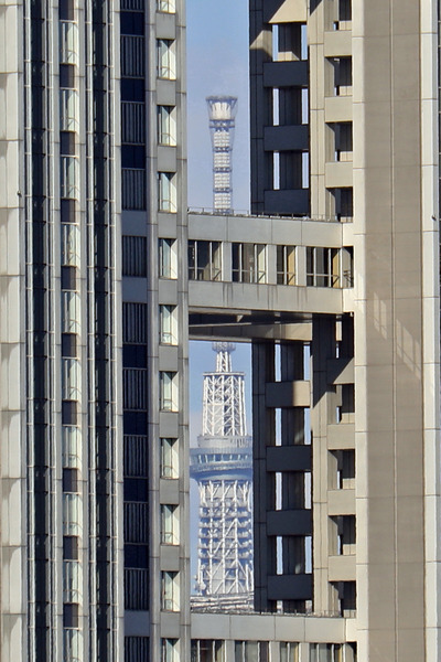 フジテレビの隙間から東京スカイツリー