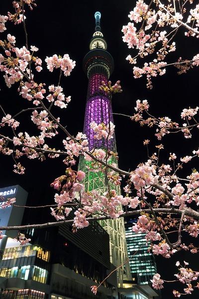河津桜と東京スカイツリー「ハイビスカス」