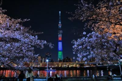 隅田公園の夜桜と東京スカイツリー
