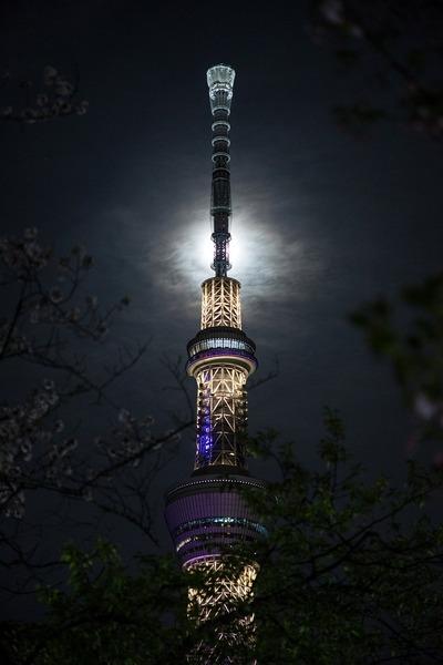 夜桜と月と東京スカイツリー