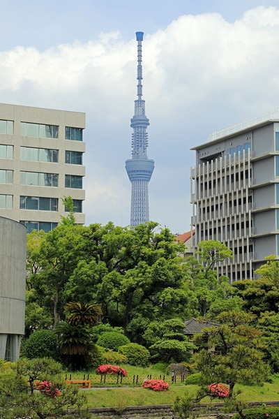 旧安田庭園から見た東京スカイツリー