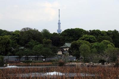 上野動物園から見た東京スカイツリー