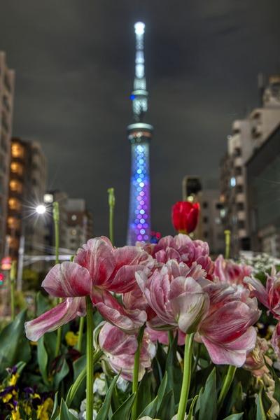 「櫻坂46」をイメージした特別ライティング