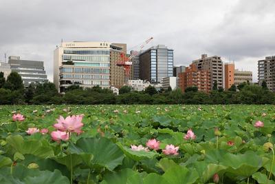 ブリリアタワー上野池之端
