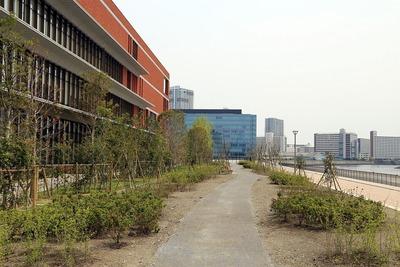 昭和大学江東豊洲病院前の植栽