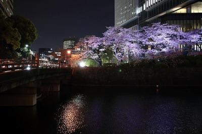 東京ガーデンテラス紀尾井町の夜桜