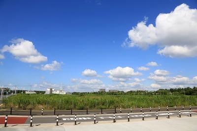 幕張新都心若葉住宅地区計画(B-5街区)