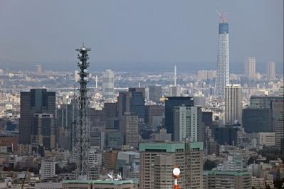 東京オペラシティから東京スカイツリー