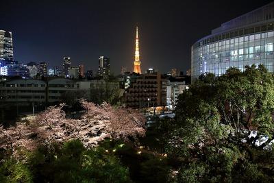 六本木ヒルズ 毛利庭園の夜桜