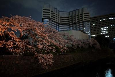 夜桜と解体中の赤プリ