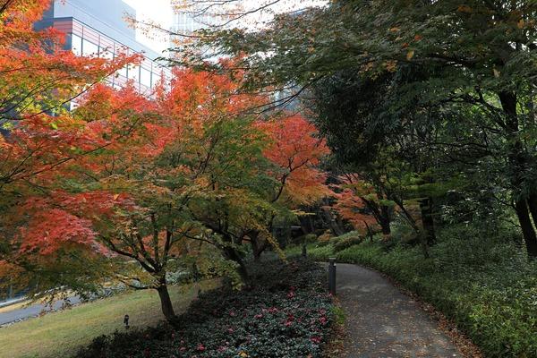 三田ツインビル西館の紅葉