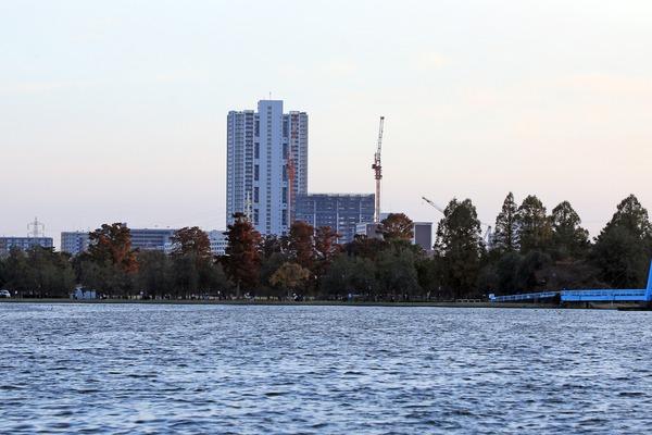 水元公園から見た金町