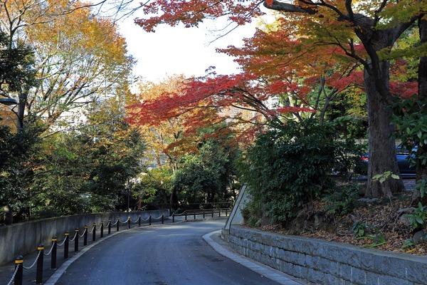 愛宕山の紅葉
