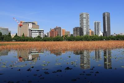 不忍池越しに見た上野のタワーマンション群