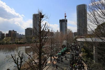 上野動物園から見た上野のタワーマンション群