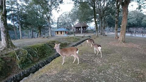 朝散歩奈良公園
