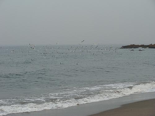 秋谷海岸の鳥