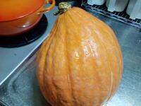 イエローかぼちゃ