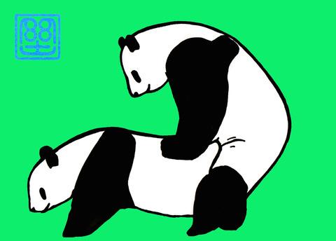 パンダの交尾(カラー) 2