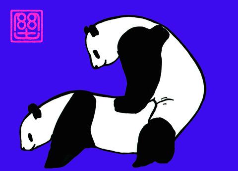パンダの交尾(カラー) 3