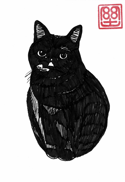 長友さん猫