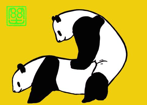 パンダの交尾(カラー) 4