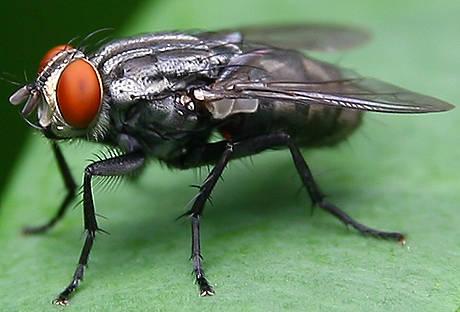 serangga08-056