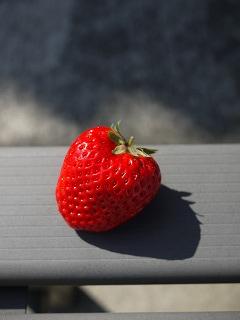 真っ赤な苺