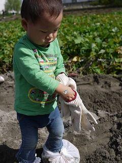芋掘り 軍手