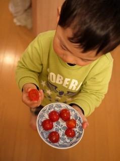 トマトのおはな