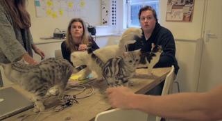 猫好き必見、猫のいるIT企業の職場環境が想像以上だった件www