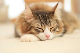 【食】 ネコ数千匹、食用に中国から密輸か ベトナムで摘発 [朝日新聞]