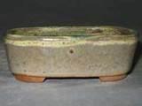 三�一陽盆栽鉢2