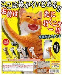 Cat_standDP