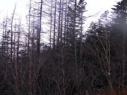 森林限界付近2