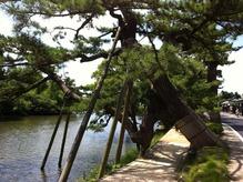 松の古木が立ち並ぶ