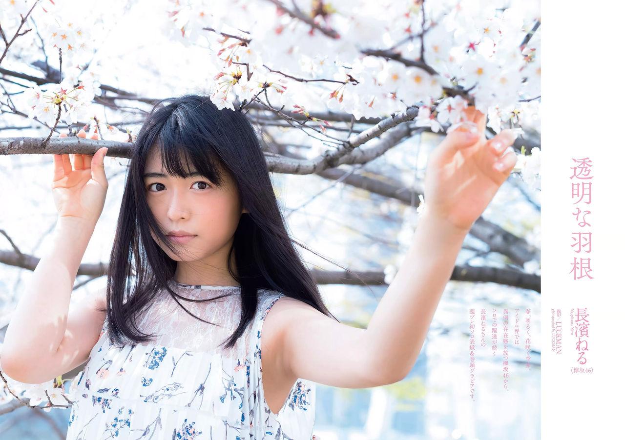 【エンタメ画像】たぬき美幼女★欅坂46 長濱ねるちゃんこれは日本一の有名人になれそう★