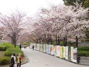 桜のキャンパス2